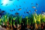 Marinella di Selinunte e Triscina: lotta alla posidonia e pulizia spiaggia
