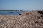 La posidonia diventa compost, progetto pilota da Castelvetrano