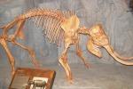 Resti fossili di elefante nano scoperti nelle finestre dell'ospedale di Ragusa Ibla