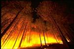 Incendi in Nevada: dichiarato lo stato d'emergenza