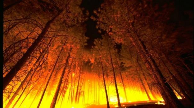 incendi, nevada, Stati Uniti, Sicilia, Mondo