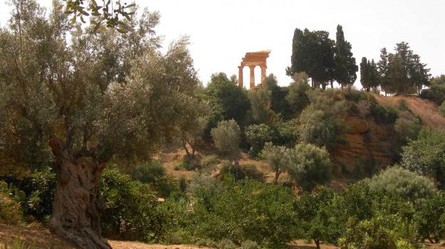 agrigento, Kolymbetra, Agrigento, Cultura