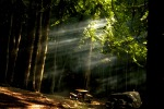 Visite nei boschi dello Stato: aperte 130 aree naturali protette