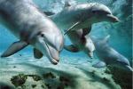 Nelle acque delle isole Eolie aumentata nel 2015 la presenza di delfini e di balene