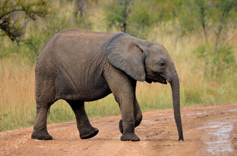 Namibia,emergenza siccità:il governo mette all'asta mille animali selvatici