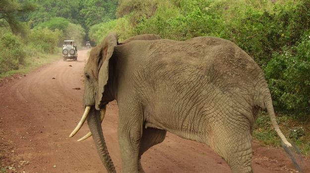 elefanti, strage, Sicilia, Società