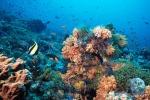 Giornata mondiale degli oceani, meno del 4% nel Pianeta è protetto