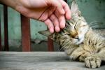Abbassano lo stress, migliorano la qualità del sonno: le fusa del gatto fanno bene alla salute