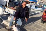 Pescato a Trabia uno squalo volpe - Foto