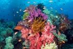 """I coralli dei Caraibi sono in pericolo: le spugne """"li soffocano"""""""