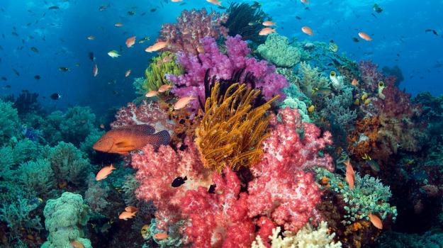 Caraibi, coralli, spugne, Sicilia, Società