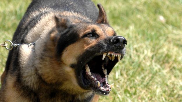 aggressione, cane, licata, ospedale, Agrigento, Cronaca