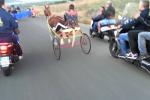Postano su Facebook il video di una corsa di cavalli, denuncia a Catania