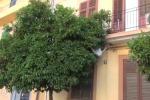 """Alberi troppo folti """"aiutano"""" i ladri ad entrare in casa: protesta a Palermo - Video"""