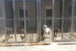 Messina, il Comune non paga: il canile rischia il collasso