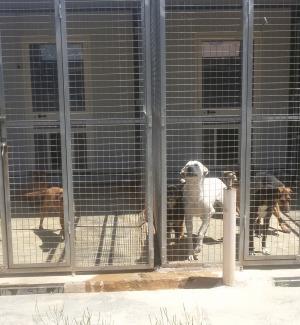 Agrigento, ambulatorio per i cani: 40mila euro per completare i lavori