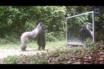 Cosa succede quando un animale si specchia per la prima volta? - Video
