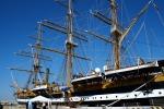 Il Wwf a bordo della Palinuro per salvare il Mediterraneo
