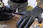 Convention sui tatuaggi ad Isola delle Femmine