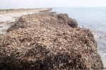 Via alla rimozione delle alghe sul litorale di Trapani