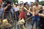 Festival della carne di cane in Cina, proteste di animalisti
