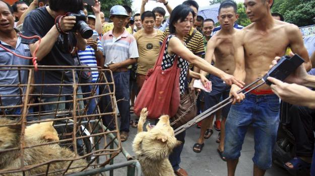 animalisti, FESTIVAL CARNE DI CANE, protesta, Sicilia, Mondo