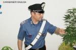 Coltivava marijuana in casa, un arresto a Comiso