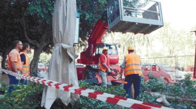 alberi abbattuti, lavori anello ferroviario, Piazza castelnuovo, Palermo, Cronaca