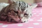 """Luhu, il """"gatto più triste del mondo"""" che il web ha adottato"""