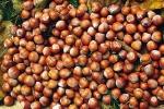 Ferrero scommette su nocciole siciliane: chiesto spazio di 5 mila ettari