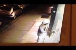 Palermo, martellate alla vetrina: intimidazione a Ottica Lipari