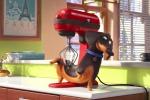 """Le giornate segrete di cani e gatti, arriva """"Pets - Vita da animali"""" - Video"""