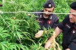 Droga coltivata tra agrumi e peperoni: arrestato agricoltore a Scordia