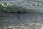 Paura in Florida, bimbo attaccato da squalo: morso ma è salvo