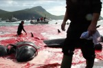 Balene uccise davanti ai bambini: animalisti arrestati - Foto