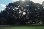 In Australia anche gli alberi ricevono le email