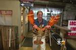Aragosta gigante in un ristorante di New York: pesa ben 20 chili