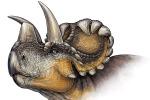 """Cornuto e """"riccioluto"""": ecco il dinosauro cugino del triceratopo"""