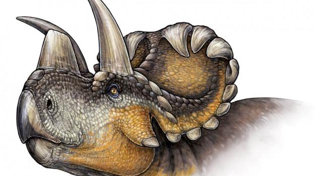 dinosauro, scoperta, Sicilia, Società