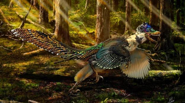 dinosauro, uccello, Sicilia, Vita
