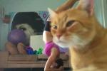 Gira un filmato mentre fa yoga ma il suo gatto le ruba la scena - Video