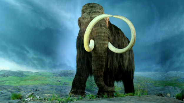 mammut, scomparsa, Sicilia, Vita