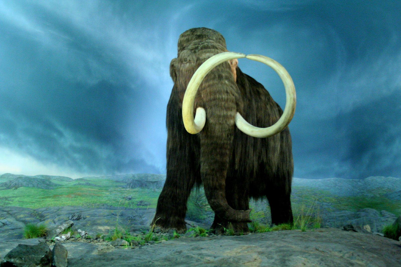 Image result for mammiferi estinti