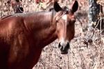 Muore Nunki, l'ultimo cavallo selvaggio delle Bahamas - Video