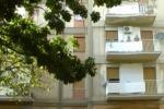 Palermo, alberi non potati da 5 anni alla Zisa