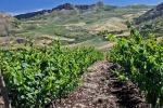 È fallita la casa vinicola «Calatrasi»: perdono il posto 32 dipendenti