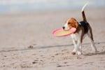 Spiagge aperte ai cani, la lettera dell'Aidaa ai sindaci del Messinese