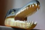 Ritrovato a Calatafimi un dente di coccodrillo di 120 milioni di anni fa