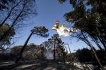 Incendio a Fiumicino, ancora canadair in azione sulla pineta. Si teme un sabotaggio