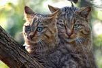 Bastona un gatto, trapanese condannato a 4 mesi di reclusione